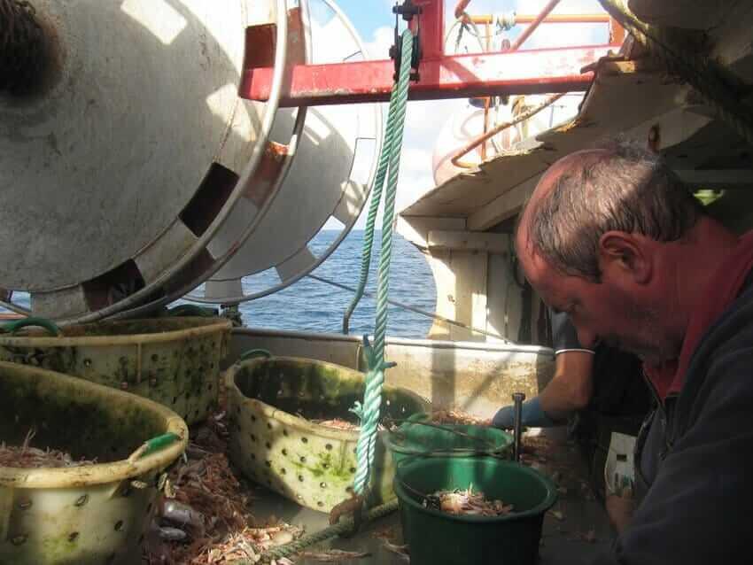 fischer-sortieren