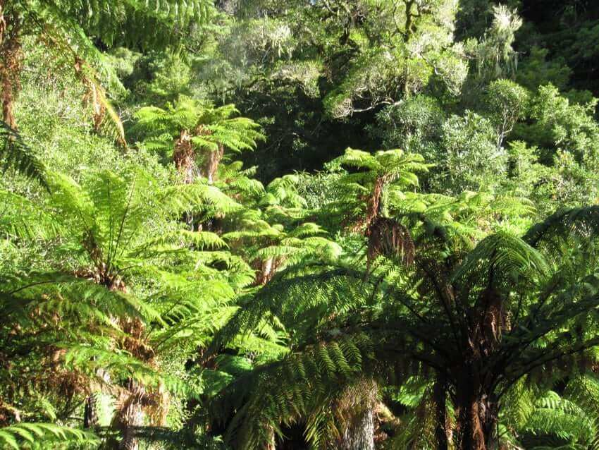 Social Entrepreneur and Eco-Tourism in New Zealand: Business plan in the rainforest