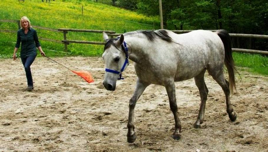 Learning to ride with horses: What we can learn from horses - 10 tips 1