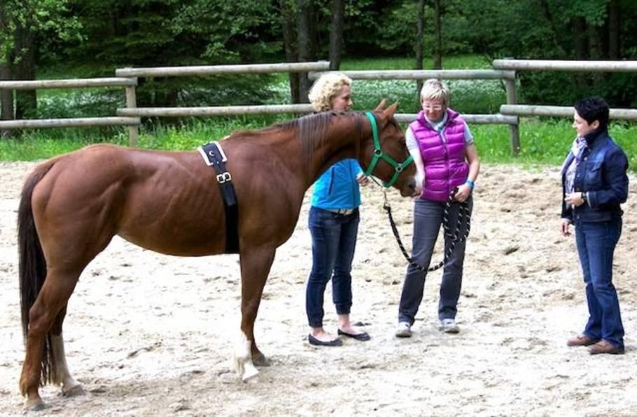 Führen lernen mit Pferden: Was macht einen Pferde-Coach aus? 2