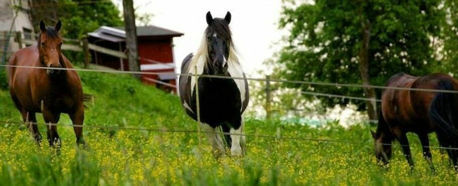 Learning to ride with horses: What we can learn from horses - 10 tips 2