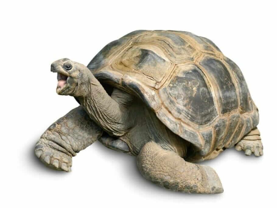 Body language: defense mechanisms turtle