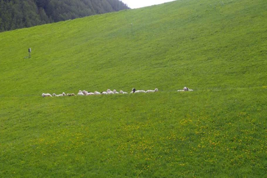 Meeting-Location Schnalstal – zwischen Filmlocation, Ötzi und Reinhold Messner: Aktivitäten {Review} Schnalstal_Suedtirol016