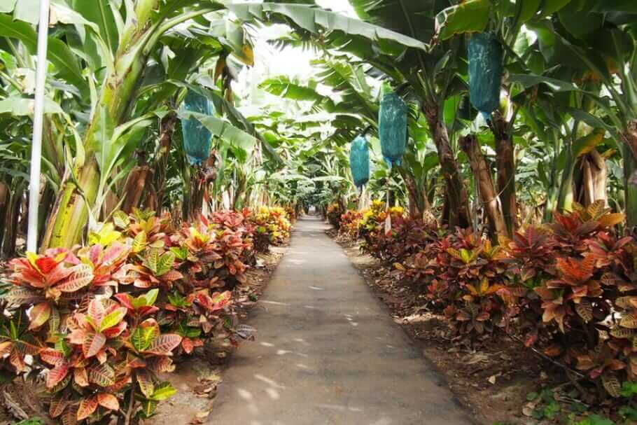 Luxus-Resort im Süden Teneriffas: Das Abama {Review} teneriffa-abama001