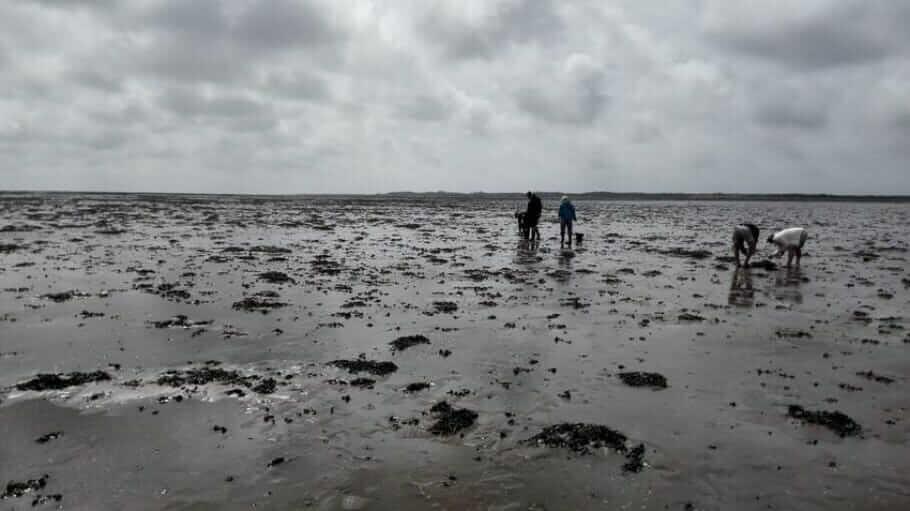 Austern-Safari-Fanoe-Denmark003