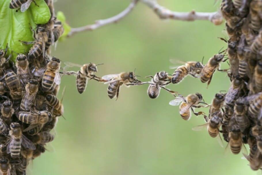 Fleissig sein oder Karriere machen? Der Arbeitsbienen-Mythos